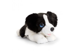 Chiot Border Collie Cuddle Puppy