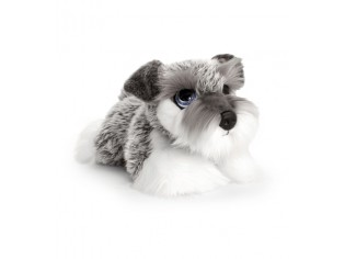 Chiot Schnauzer Cuddle Puppy