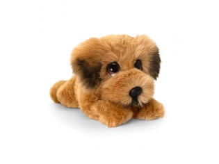 Chiot Terrier irlandais Cuddle Puppy