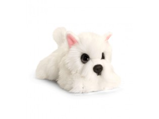 Chiot Westie Cuddle Puppy